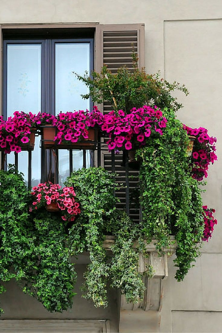 Green Balcony Ideas 40 Window and Balcony Flower Box Ideas Photos