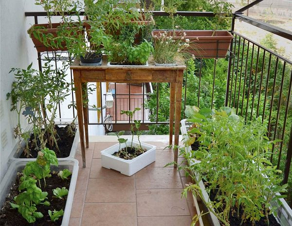 Green Balcony Ideas 8 Balcony Herb Garden Ideas You Would Like to Try