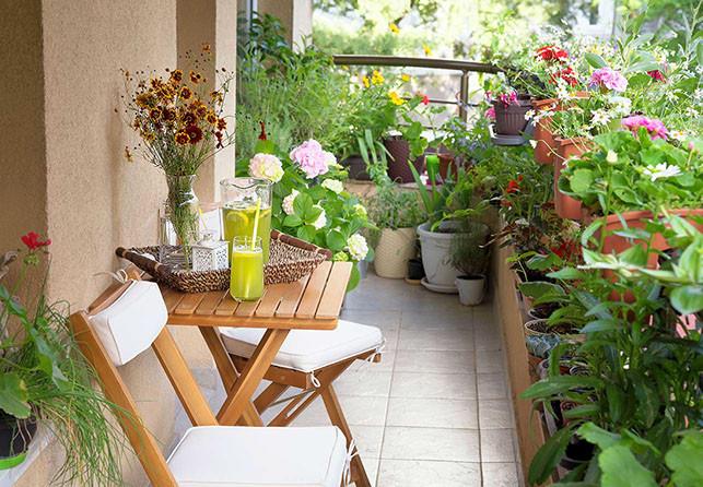 Green Balcony Ideas Blütenpara S Für Bienen L Wohnfreude