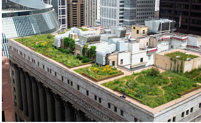 Rooftop Garden Chicago S Green Rooftop Experiment