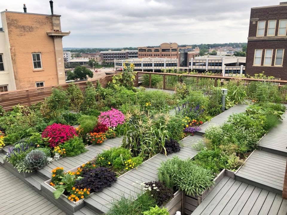 Rooftop Garden Downtown Building Offers Rooftop Garden Harvest