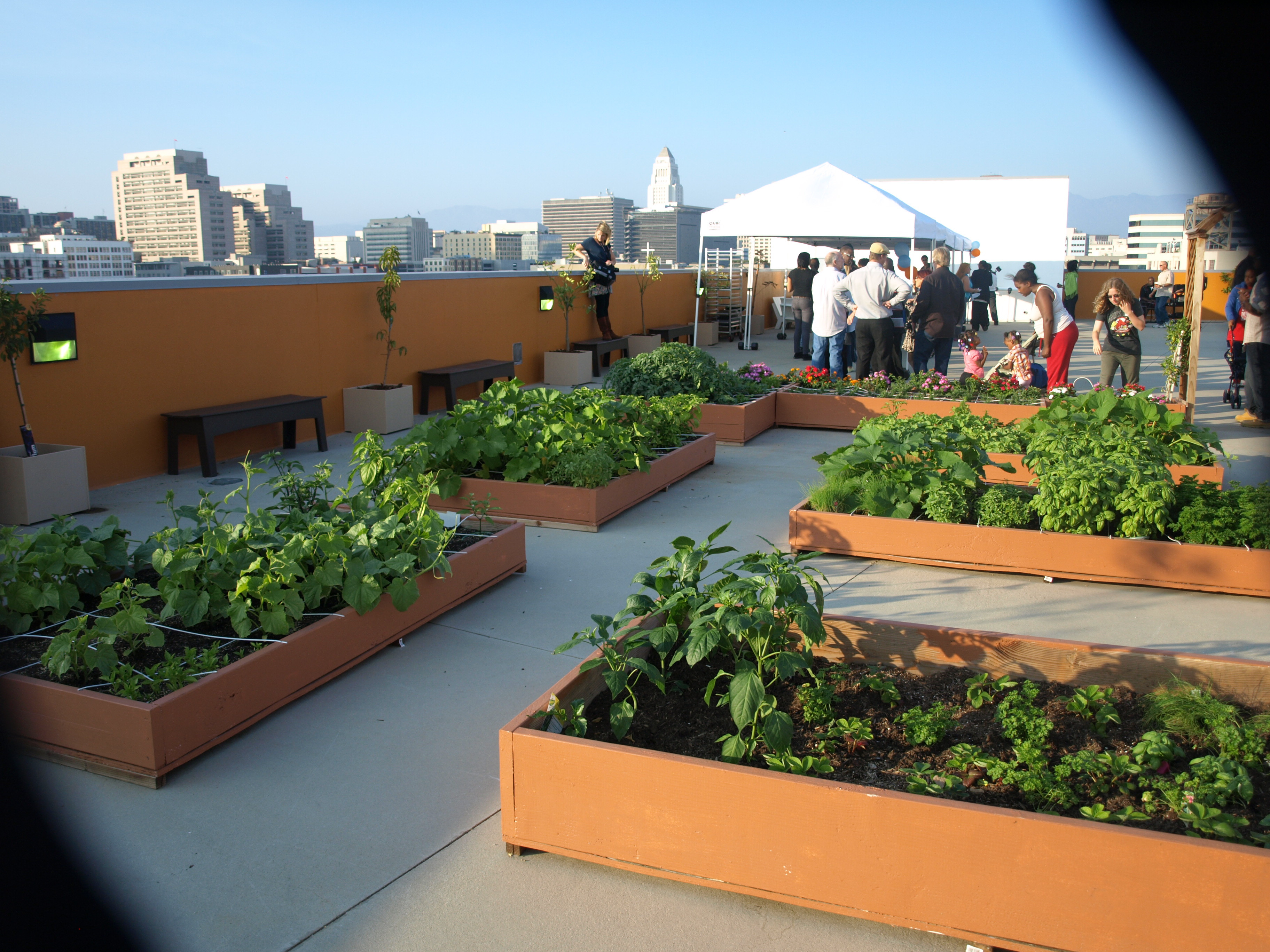 Rooftop Garden E Room Challenge Week 1 Aquahaus S A Rooftop Lounge