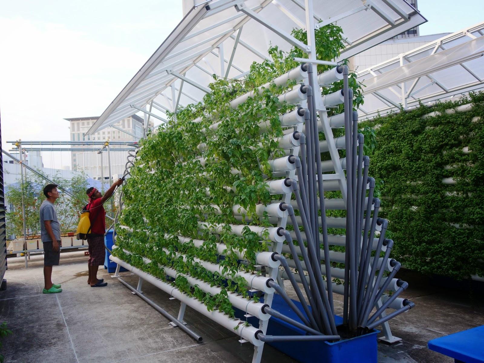 Rooftop Garden Effectiveness Of Rooftop Gardens