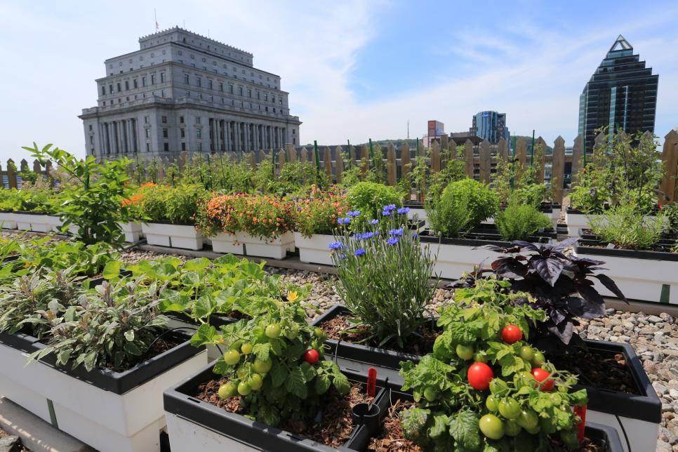 Rooftop Garden Hgtv Presents Gardens In the Sky and Other Rooftop Green