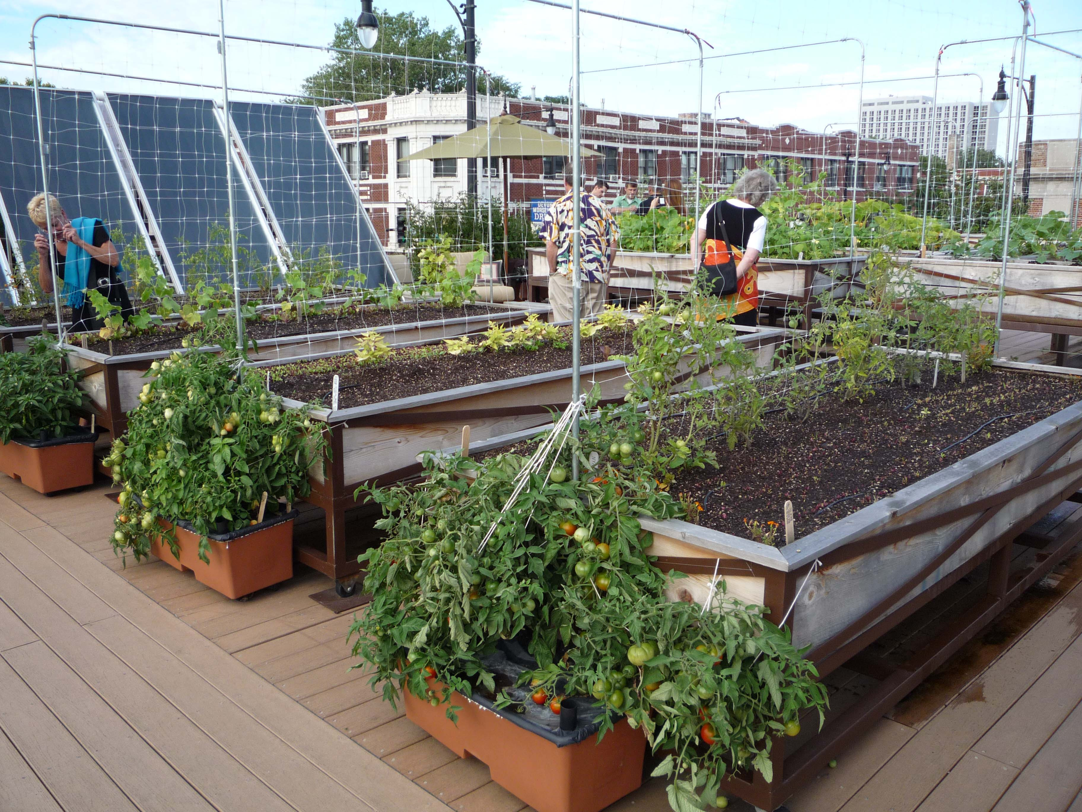 Rooftop Garden if Xzibit Pimped My Roof