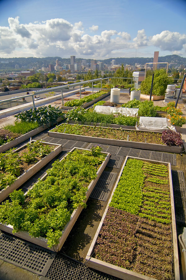 Rooftop Garden Our Rooftop Garden – Noble Rot