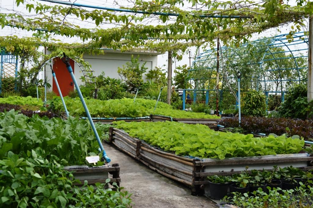 Rooftop Garden Regenerative organic Agriculture Roof top Gardens for