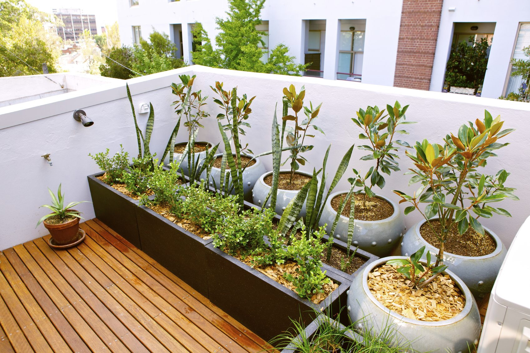 Rooftop Garden Rooftop Gardening for City Dwellers Gardening Know How