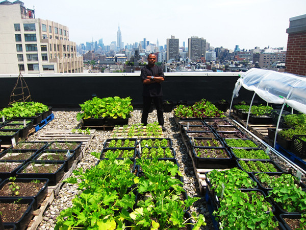 Rooftop Garden Rooftop Gardens Healthy Food for Cities