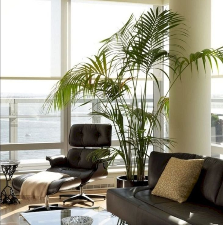 Modern Living Room Decorating Ideas Plant 25 Beautiful Living Room Plants Ideas for the Living Room