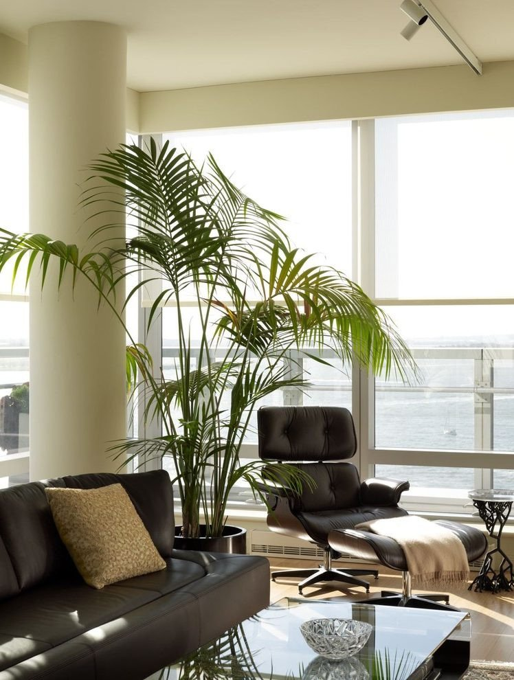 Modern Living Room Decorating Ideas Plant Modern Living Room Plants