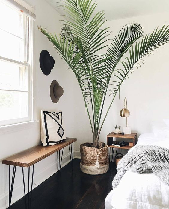 Palm Tree Decor for Bedroom Pinterest Bellaxlovee ✧☾