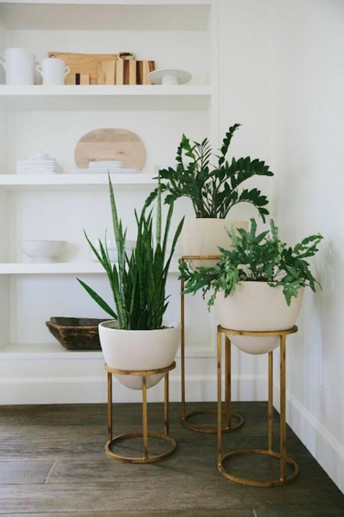 Plant Stand Ideas to Fill Your Living Room أستخدام نباتات الزينة فى الديكور