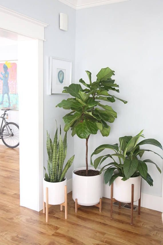 Plant Stand Ideas to Fill Your Living Room Mid Century Modern Planter with solid Wood Plant