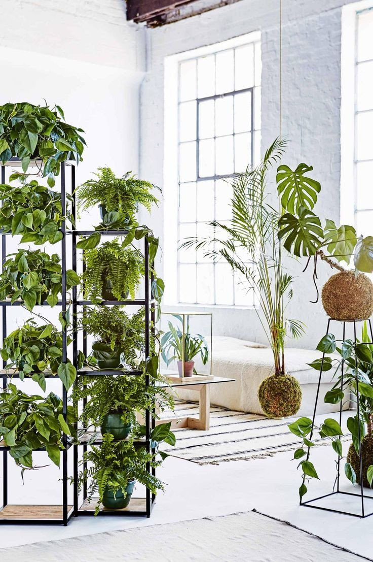 Plant Stand Ideas to Fill Your Living Room the 25 Best Plant Stands Ideas On Pinterest