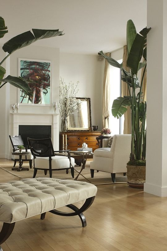 Tree Decor for Living Room Banana Plant Indoor Tree White and Neutral Living Room