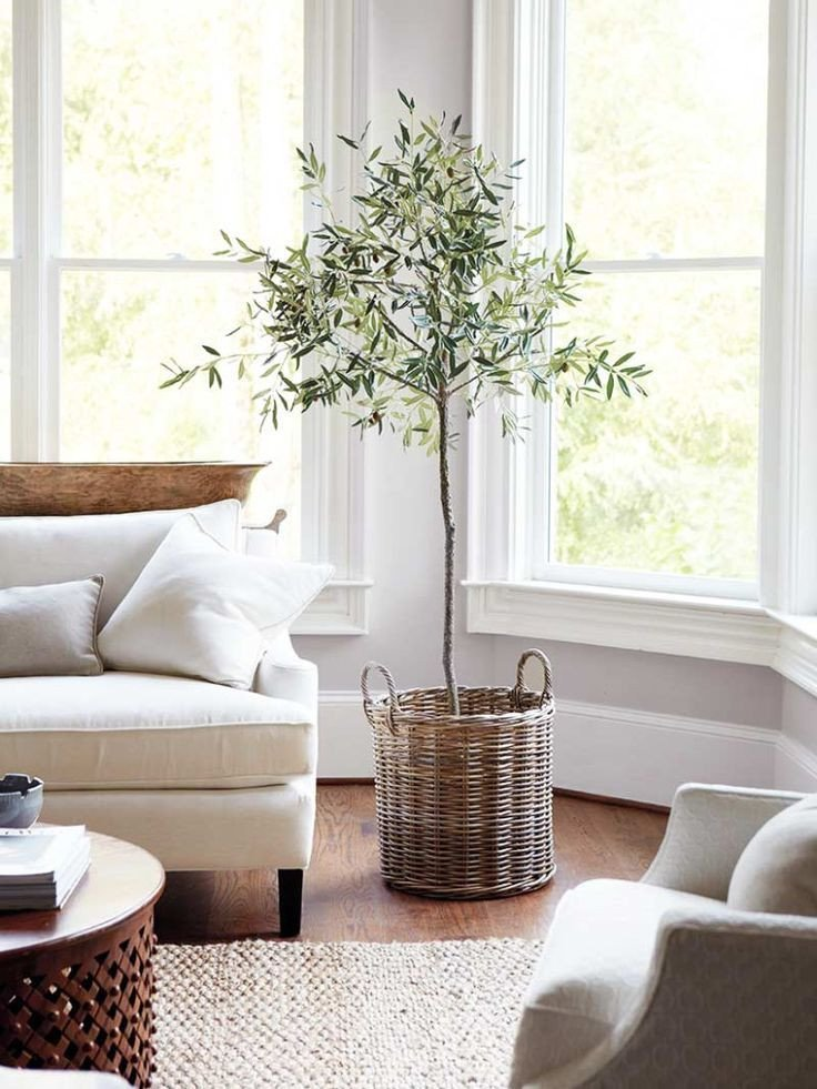Tree Decor for Living Room Plant Of the Year Indoor Olive Tree