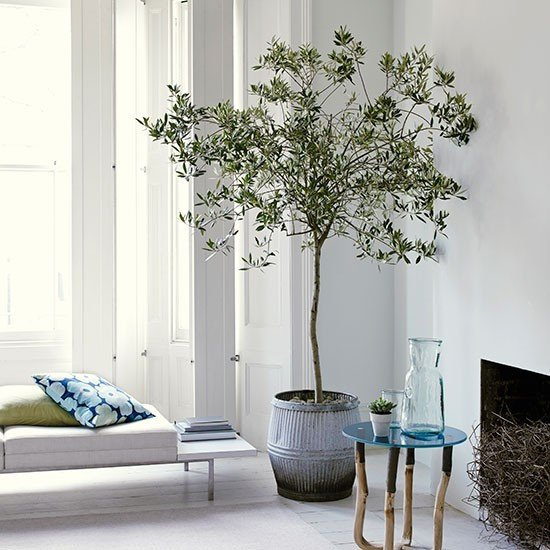 Tree Decor for Living Room White Living Room with Olive Tree